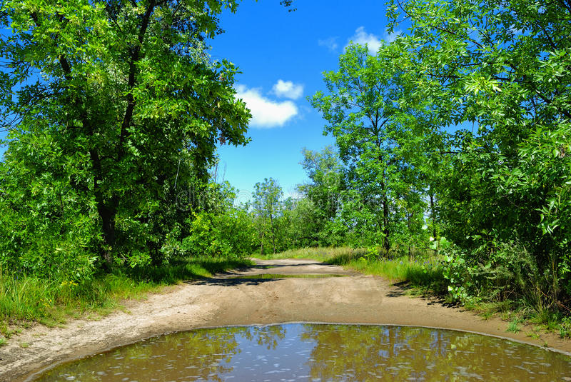Download Rain Puddle On Road And Trees Stock Photo - Image: 20853614