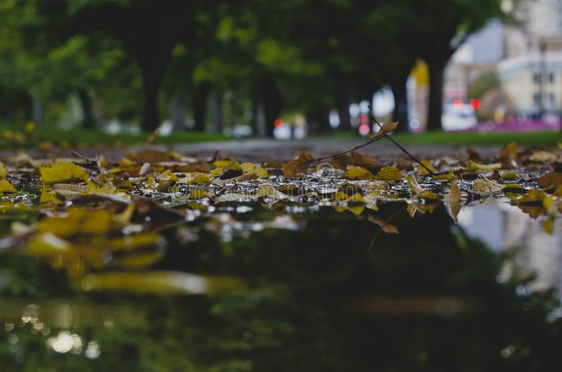 The rain puddle on the sidewalk filled with leaves royalty free stock photo