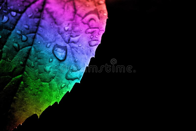 Rain on a rainbow. A beautiful simple leaf in the rain, made more vibrant with a rainbow effect which gives the subject a quirky and potentially commercial feel royalty free stock images