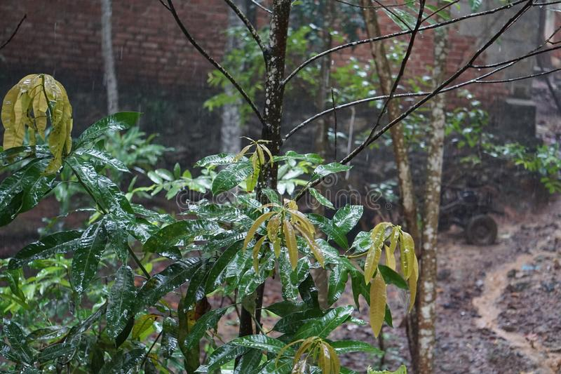 Rain. Y Season has a very pleasant weather with cool breeze and  showers. In y season plants, trees, and grasses look very green and attractive. Ponds, rivers stock image