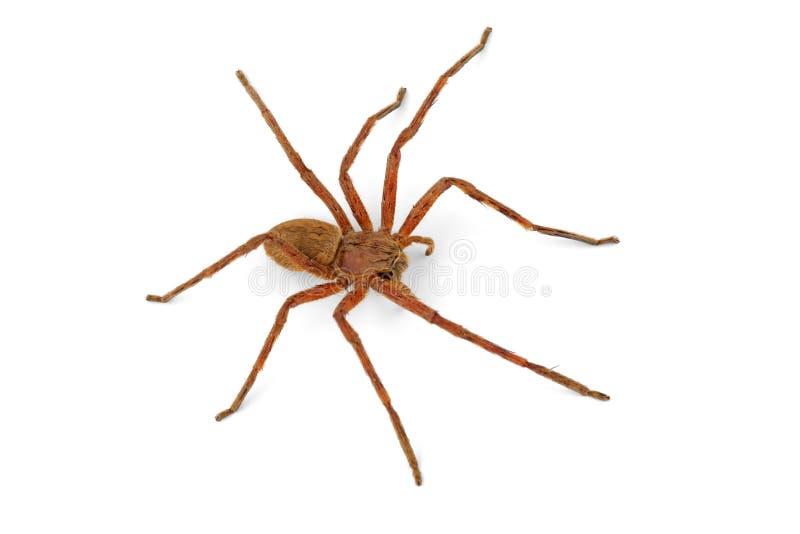 Rain spider royalty free stock photos