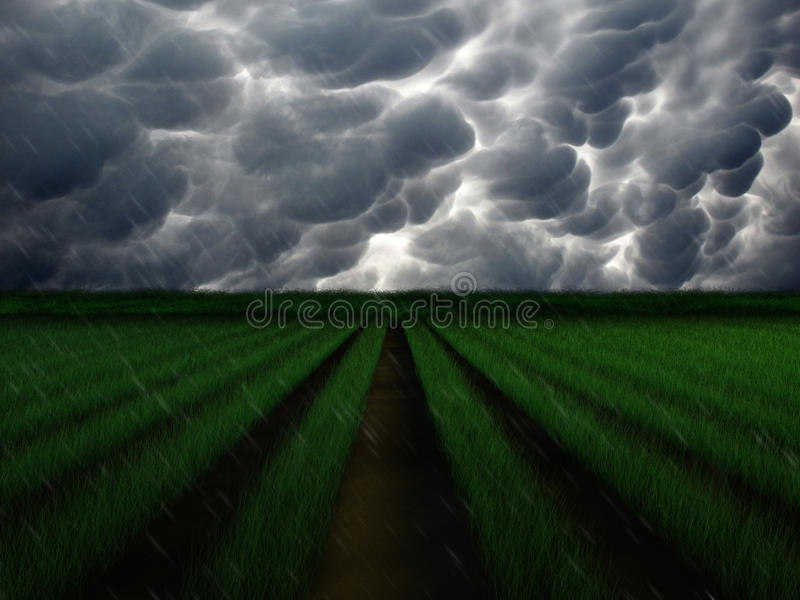 Rain Storm Over Farm. Rendered crop row in stormy weather