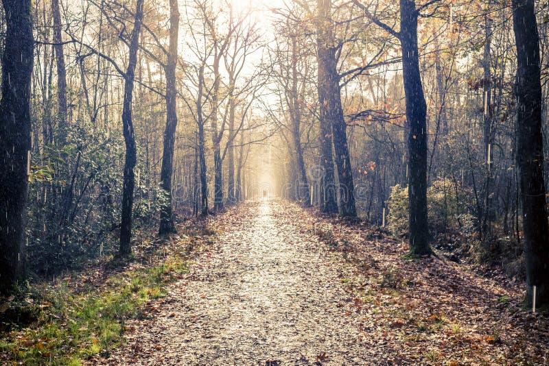 Rain and sunshine on a forest path. Kampina nature reserve, Boxtel, Netherlands stock photography