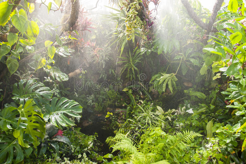 Rain in tropical rainforest stock photography