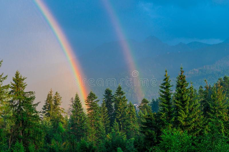 after a rain two rainbows above a wood stock image