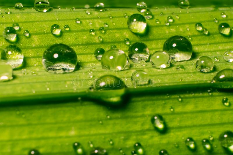 Rain water drops. And with abstract blur background.vintage stock photo