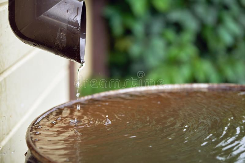 Rain water flows from a plastic drainpipe to the metal barrel in garden. In summer close up royalty free stock photo