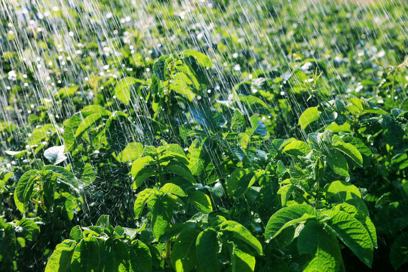 Rain waters on the field royalty free stock photography