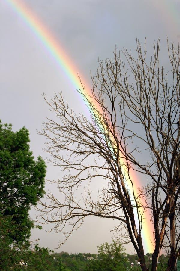Download Rainbow stock photo. Image of multi, nature, light, sunlight - 15560452