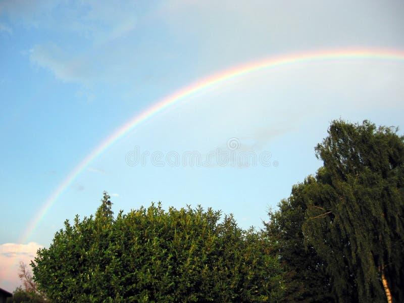 Download Rainbow stock image. Image of rain, raindrops, trees, colors - 183205
