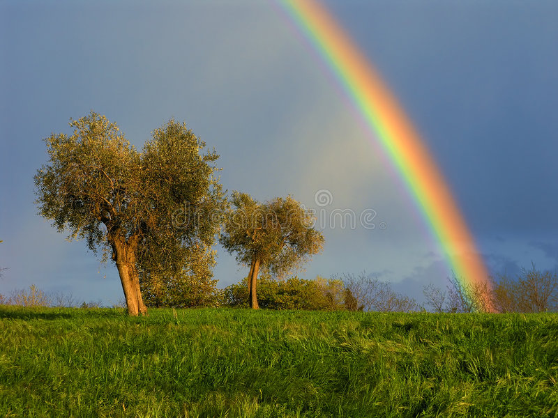 Download Rainbow stock image. Image of countryside, olive, agriculture - 2416369