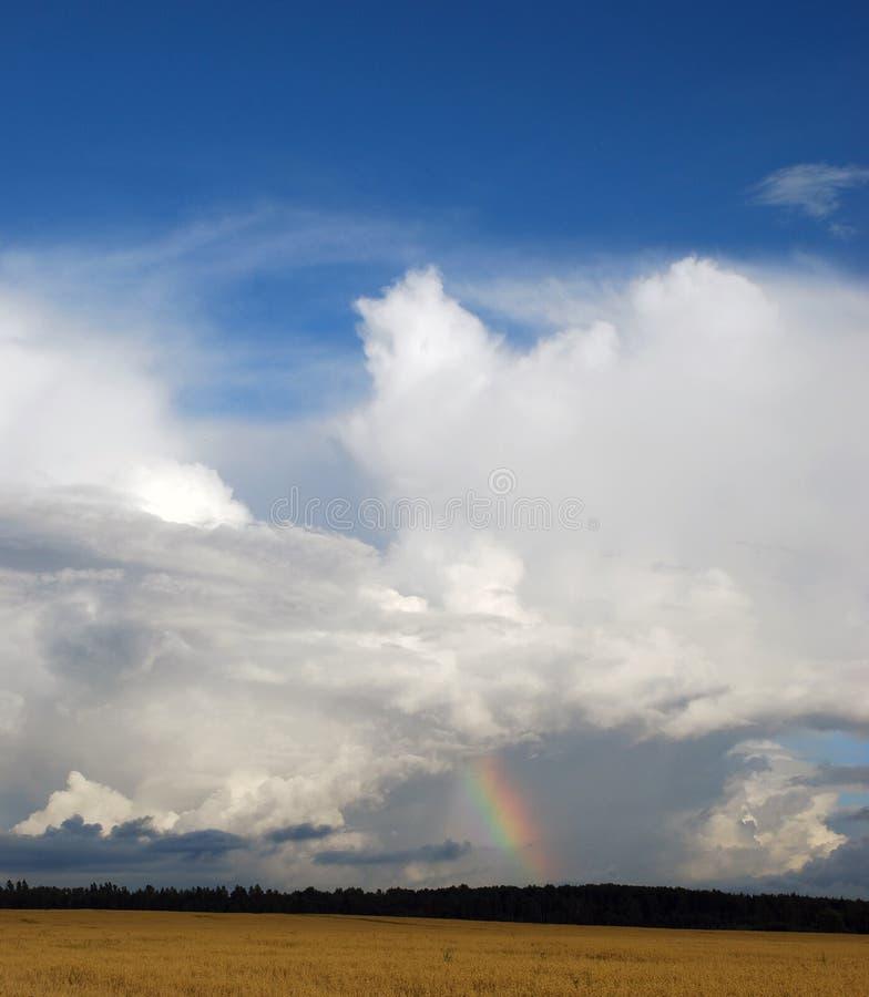 Rainbow. Over oats field. Summer stock photography