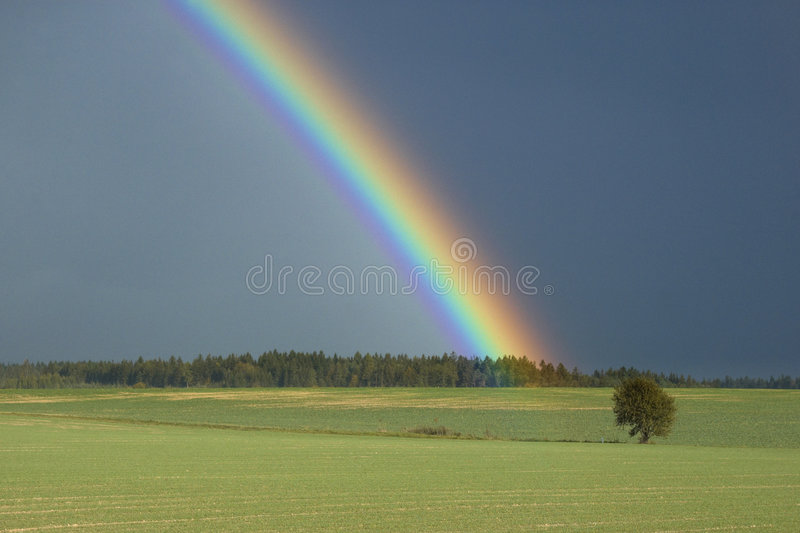 Rainbow above a tree stock images