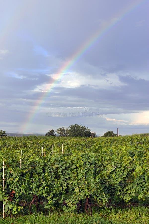 Rainbow above vineyard stock photo