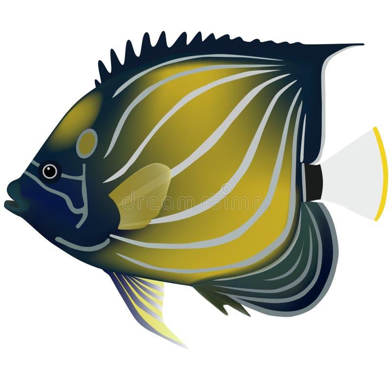 Rainbow Azul-Rodeado de peixes pequenos ilustração do vetor