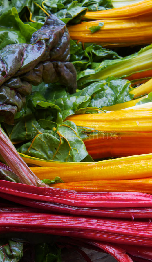 Rainbow Chard. Pile of brigh red, yellow, orange, and green colors of rainbow chard at the farmers market royalty free stock photos