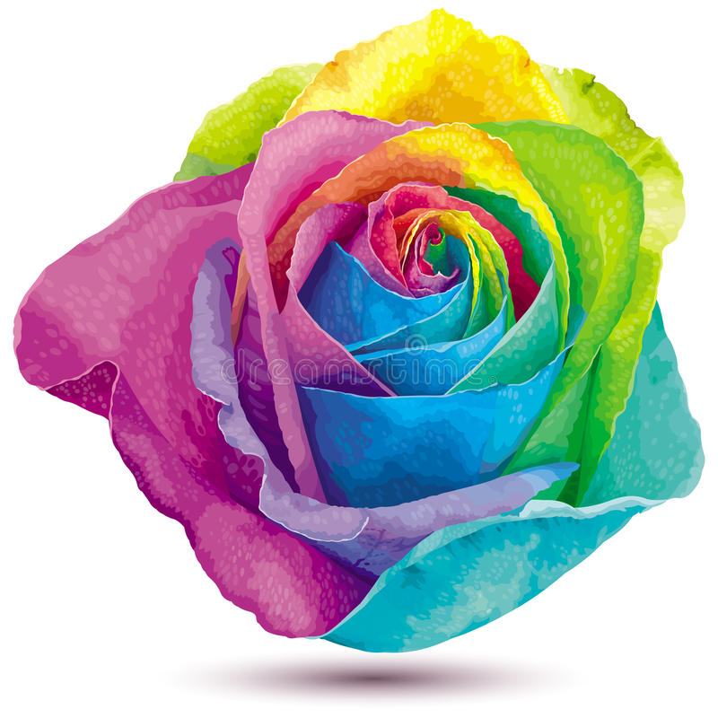 Rainbow color rose stock illustration