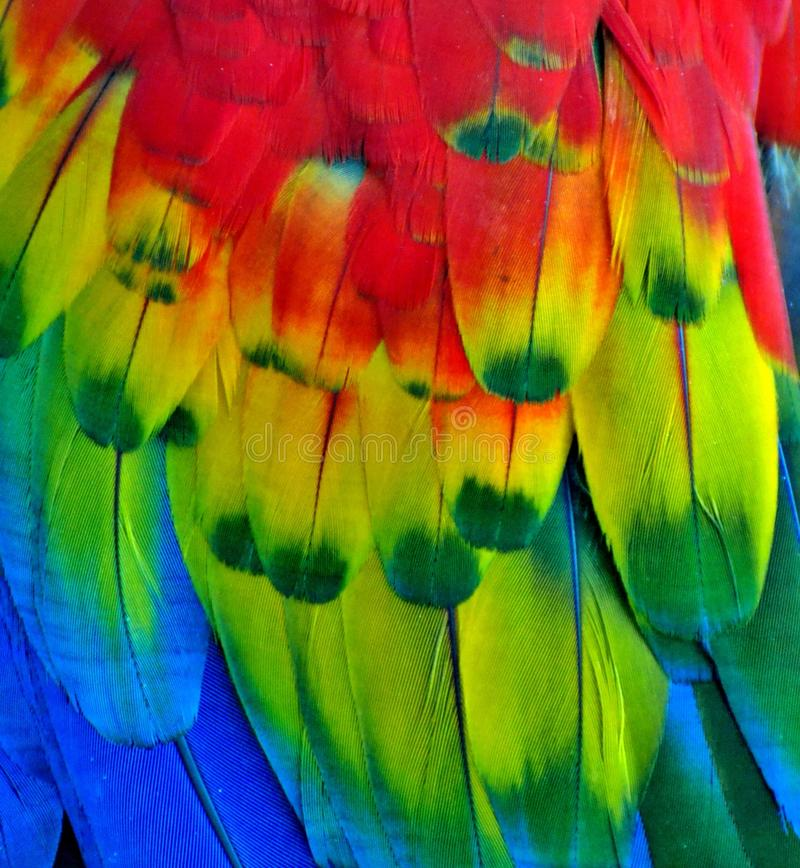 Rainbow-Colored Macaw Feathers. Macro photo of multi-colored macaw feathers royalty free stock images