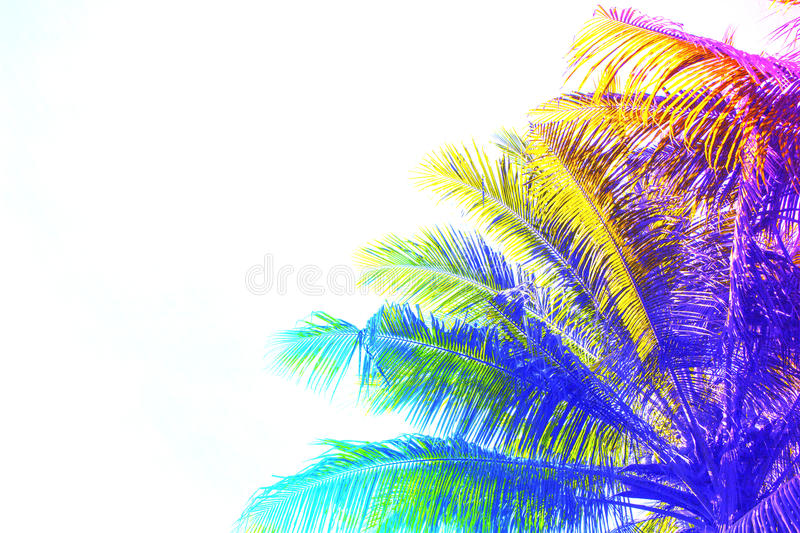 Rainbow colored palm tree crown on sky background. Fantastic toned photo with coco palm tree on white. royalty free stock image