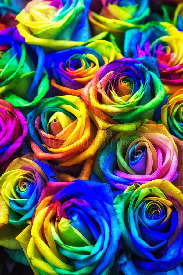Rainbow colored roses royalty free stock photography
