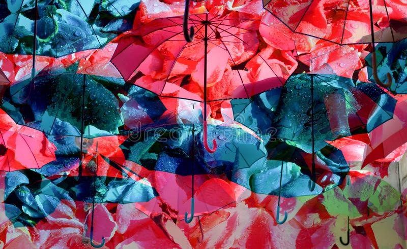 Colorful umbrellas under a pouring rain. The rainbow colors in flight for freedom