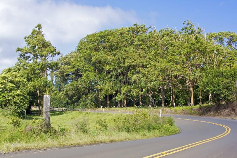 Download Rainbow Eucalyptus Grove Royalty Free Stock Photo - Image: 22627185
