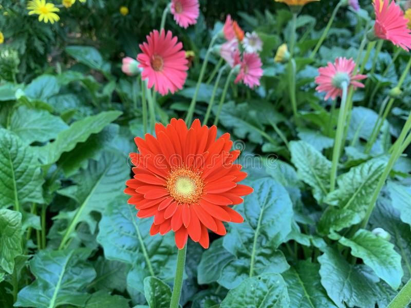Rainbow flowers in garden bed royalty free stock photos