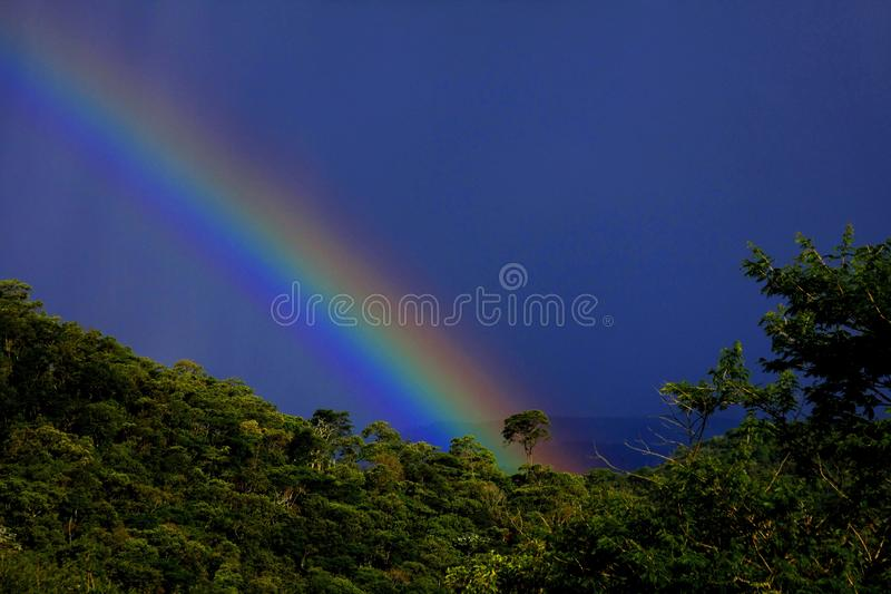 Rainbow in the forest stock photos