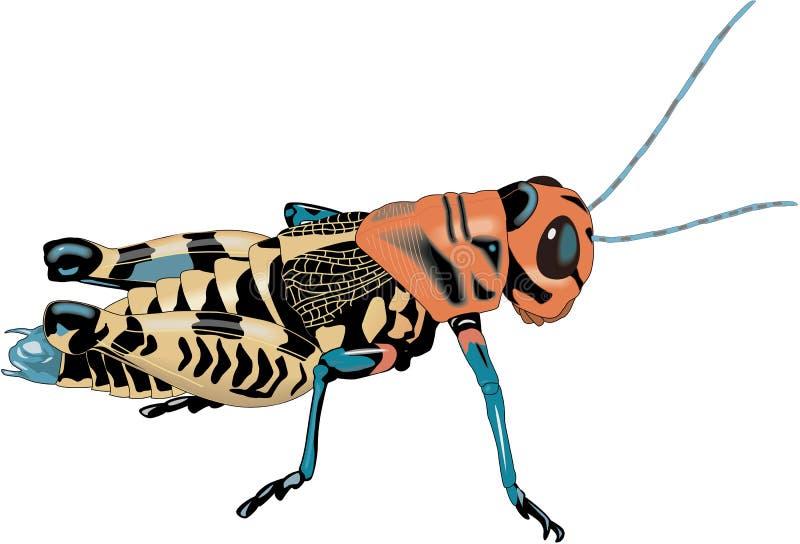 Rainbow Grasshopper Vector Illustration. A vector illustration of a rainbow grasshopper stock illustration