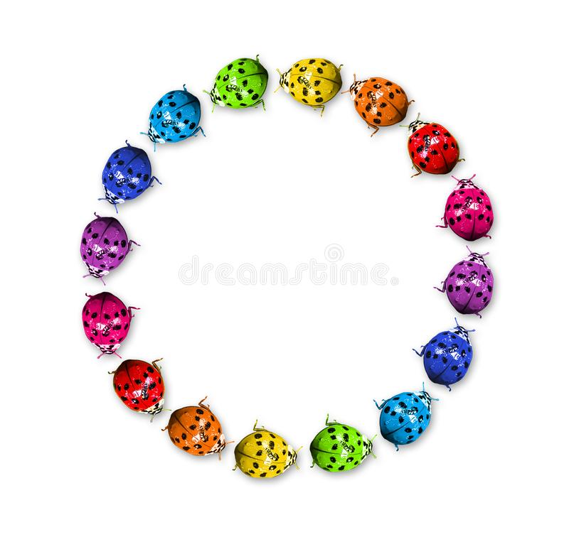 Rainbow ladybugs in the ring royalty free stock photo