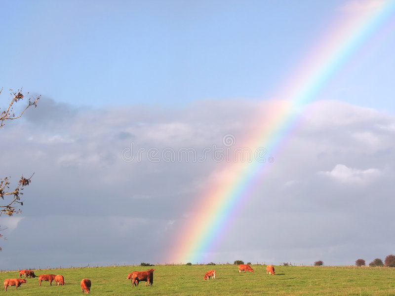 Download Rainbow Over Field Stock Photo - Image: 1421520