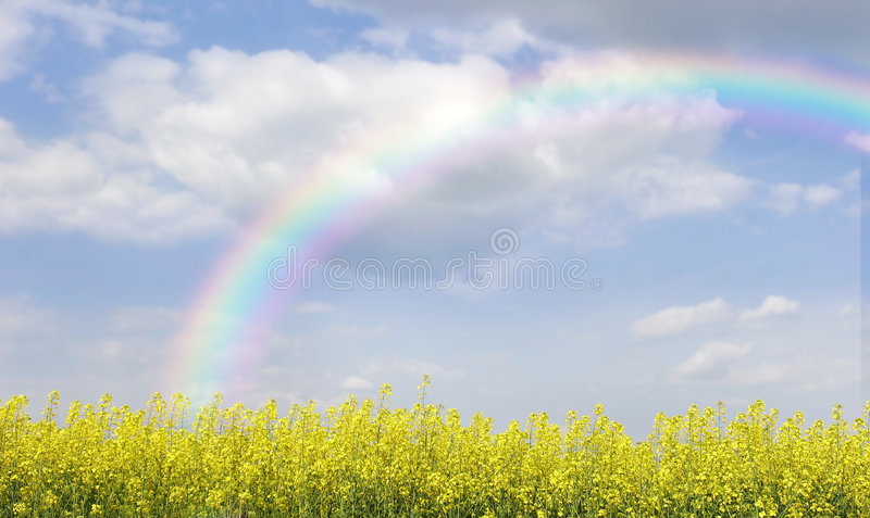 Download Rainbow Over Field With Yellow Flowers Stock Image - Image of grass, heavens: 5805113