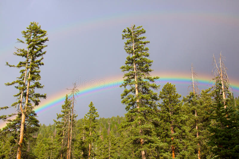 Download Rainbow over Forest stock photo. Image of nature, forest - 16558984