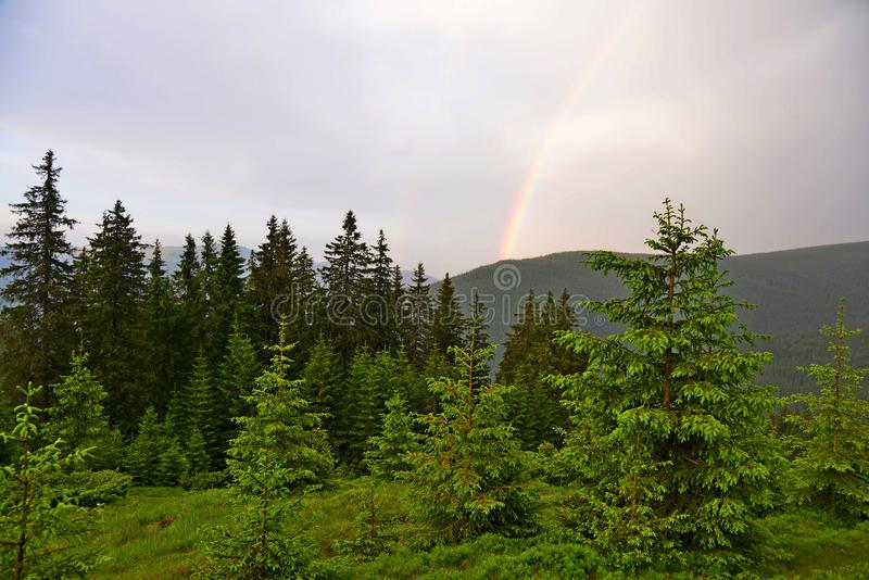 Rainbow over the forest of Carpathian mountains, Ukraine royalty free stock photo