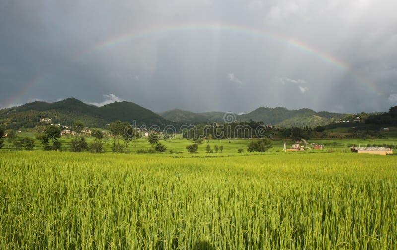 Rainbow over rice field royalty free stock photo