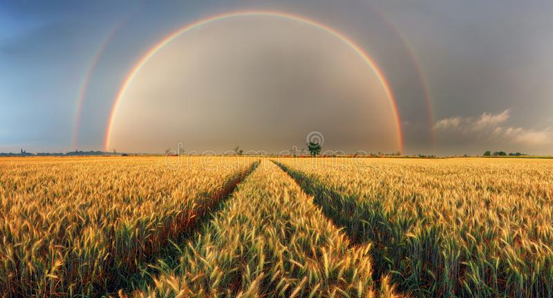 Rainbow over wheat field, panorama stock photos