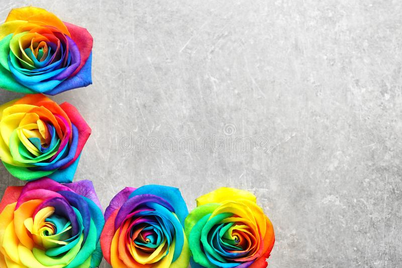 Rainbow rose flowers on gray background royalty free stock photos