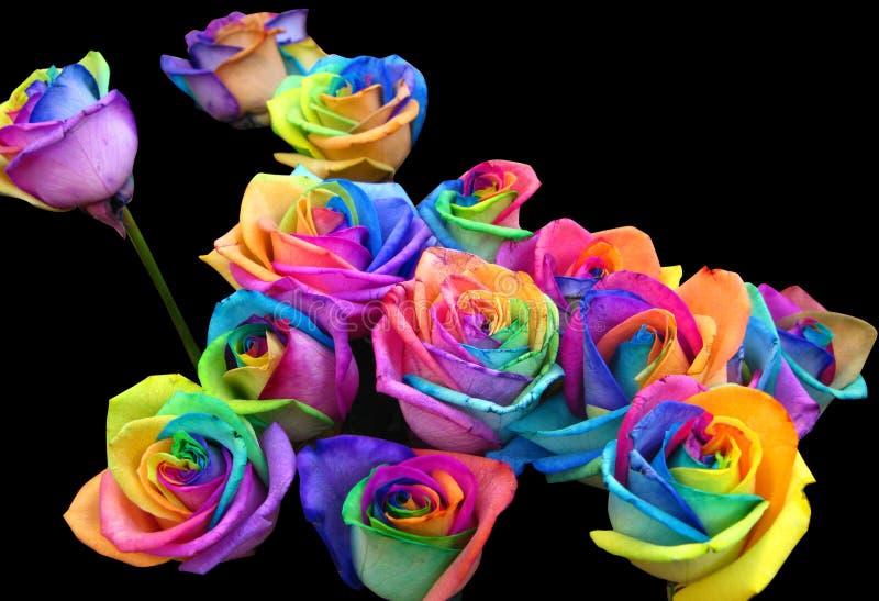Rainbow roses stock image