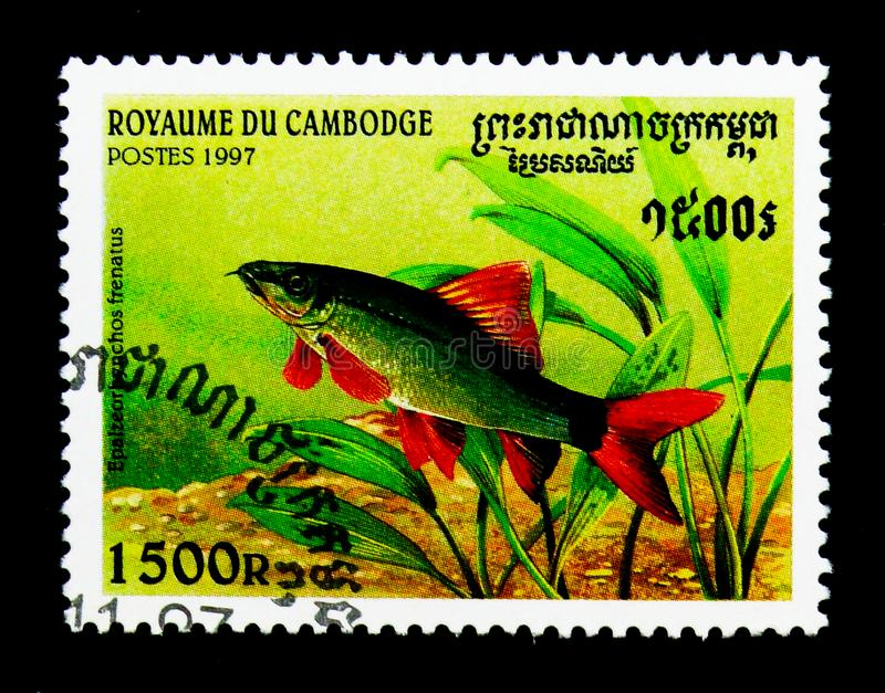 Rainbow Shark Epalzeorhynchos frenatus, Fishes serie, circa 19. MOSCOW, RUSSIA - NOVEMBER 24, 2017: A stamp printed in Cambodia shows Rainbow Shark stock photos