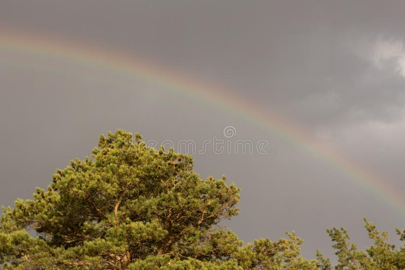 Rainbow in the sky above the pines.  royalty free stock photography