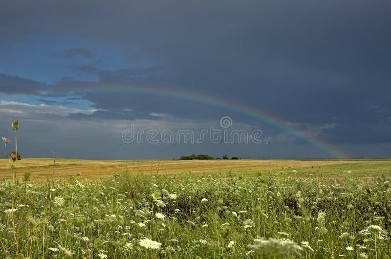 Rainbow sopra il campo fotografie stock