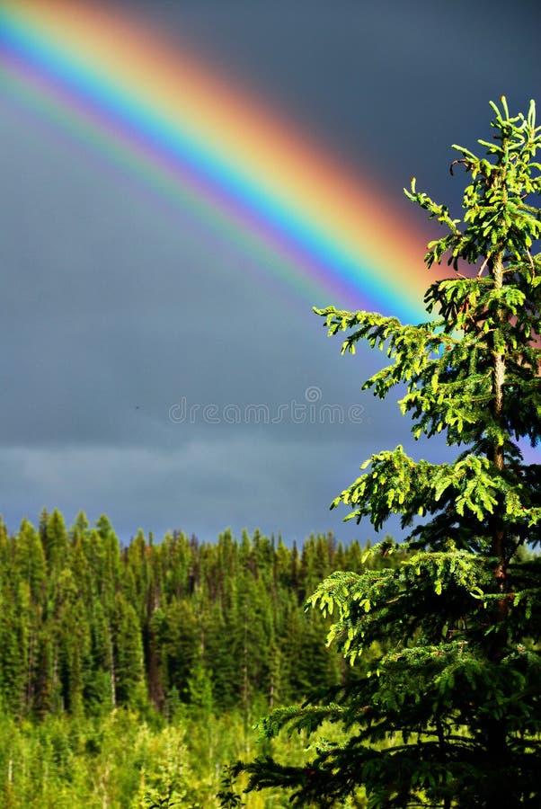 Rainbow and tree royalty free stock photos