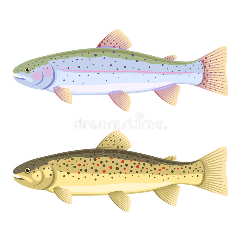 Rainbow trout and brown trout. Set of two fish, rainbow trout and brown trout, isolated stock illustration