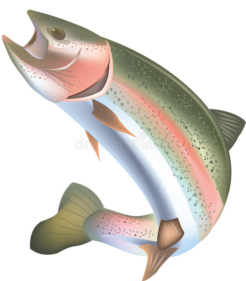 Rainbow trout. Freshwater animal type predator trout stock illustration