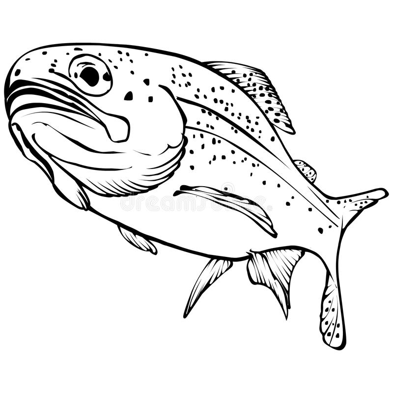 Rainbow Trout Vector Illustration. Black and White Rainbow Trout Vector Illustration stock illustration