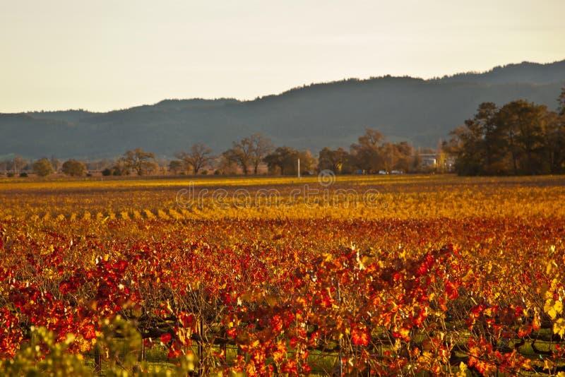 Download Rainbow Valley Vines Stock Image - Image: 28705451