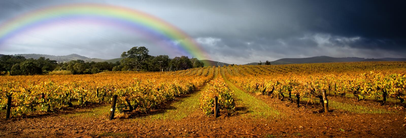 Rainbow Vineyard stock photo