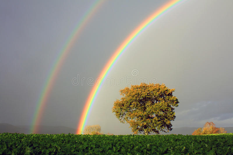 Rainbows and Oak Tree, Wales royalty free stock images