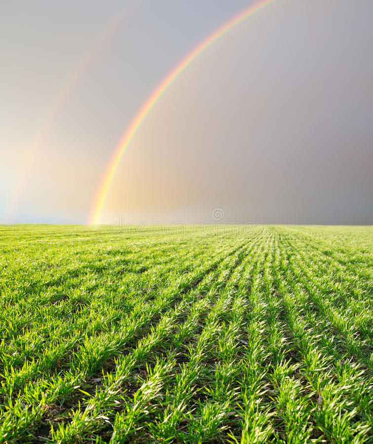 Rainbows Over Field Stock Photography