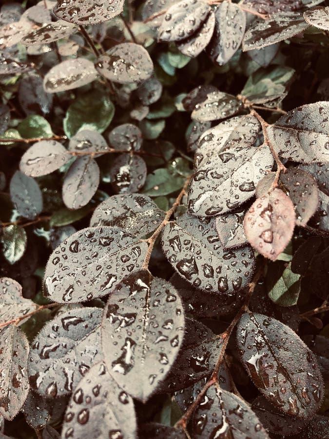 Raindrop fotografie stock